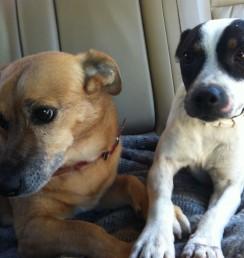 take your dogs on holiday at Casa del Paso, Bolulla, Algar Waterfalls,El Castell de Guadalest, Altea, Benidorm, Costa Blanca, Spain
