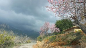 IMG_0298 (Almond-blossom)